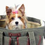 accessori-cani-inadatti