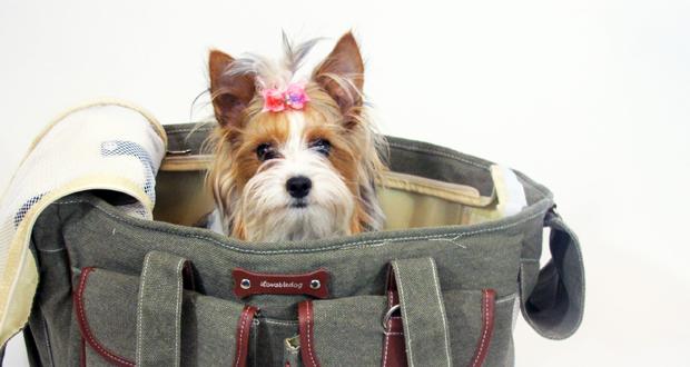 5 accessori che il tuo cane non deve avere